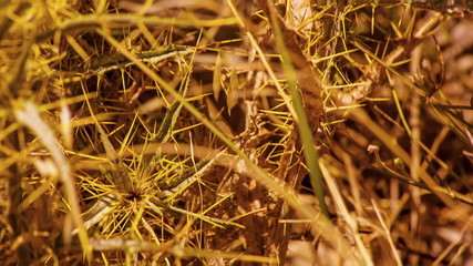 Dry bush thorns. Drought. Panning. HD 1080.