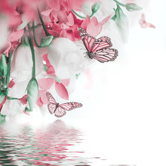 Bouquet of white and pink roses, butterfly. Floral background.