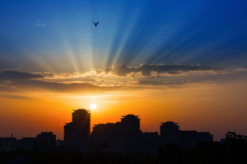Rays of lights at sunrise sunset over a city with birds on light