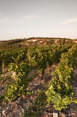 vinyard greaps