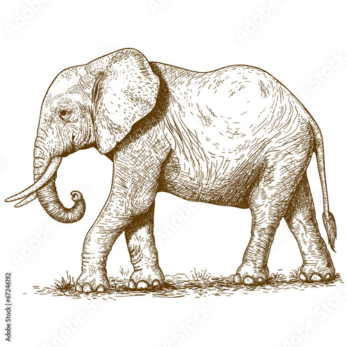 Poster vector illustration of engraving elephant