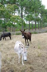 Niedliche Esel in Frankreich 4