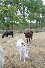 Niedliche Esel in Frankreich 2
