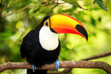 Colorful tucan in the aviary poster