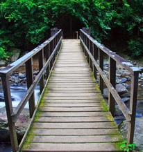 Pont sur l'eau qui coule dans la forêt