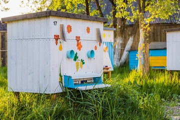 Beehive in the private apiary
