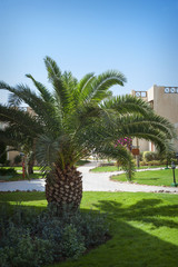 Beautiful palm tree on the hotel