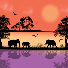 Elephants silhouette in africa