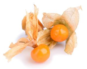 Physalis fruit, isolated on white