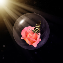 Heliconius charitonia on Chicago peace rose in glass globe