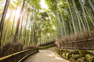 Bamboo Forest in Kyoto, Japan © SeanPavonePhoto