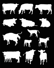 cows silhouettes