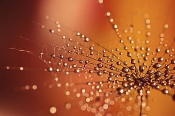 Drops © mirkawolfova