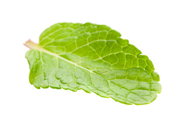 Peppermint herb leaf