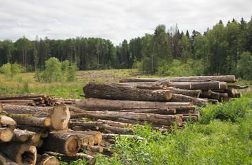 Large Lumber Pile