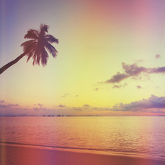 Tropical sunset with palm tree, retro stylized
