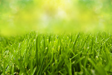 freshness grass field with green abstract background