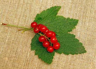 Red currant on a rough fabric