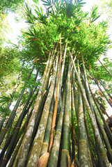 bamboo plant in forest