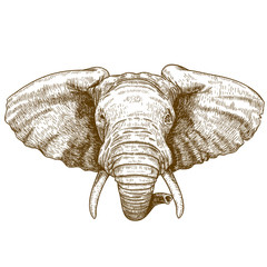 vector illustration of engraving elephant head