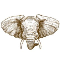 vector illustration of engraving elephant head