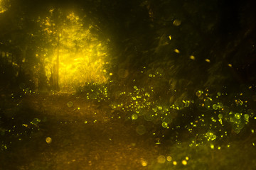 Fireflies with Tung Blossom