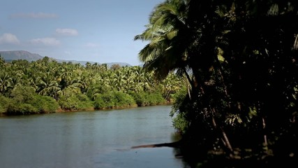 Big river between palms