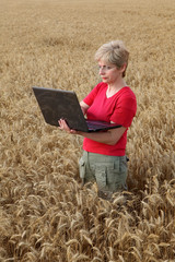 Agriculture, agronomist examine wheat field with laptop