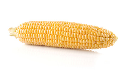 The  corn cob
