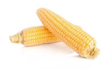 Two maize cobs