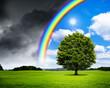 canvas print picture - Eiche mit Regenbogen