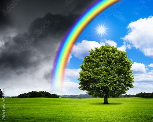 canvas print picture Eiche mit Regenbogen