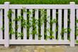 Zaun aus weißem PVC mit Hecke