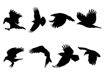 Set of flying ravens