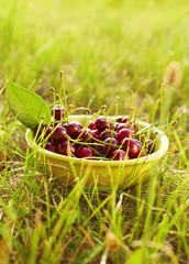 A bowl full of fresh cherries