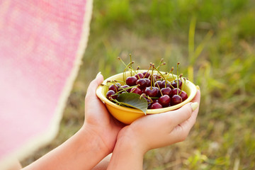 Female hands holding fresh cherries