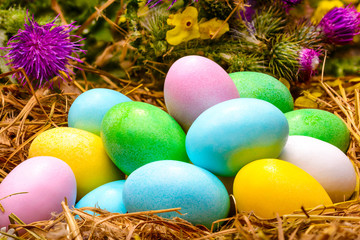 Colored Eggs in Nest