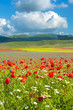 Beautiful full color spring flowers in Umbria, Italy