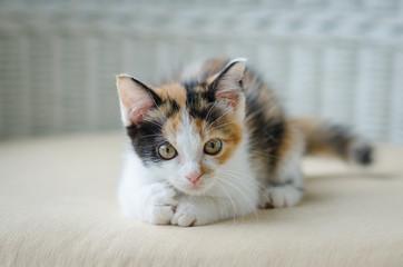Cute kitten staring