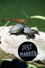 just married turtle
