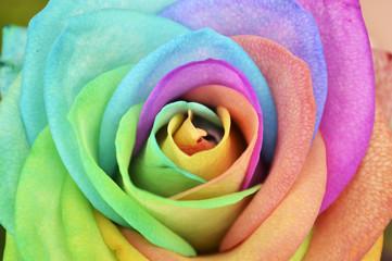 Rainbow Rose Background