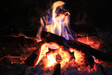Burning wood on campfire