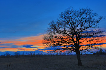Tree on meadow after sunset