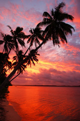 Silhouetted palm trees on a beach at sunset, Ofu island, Tonga