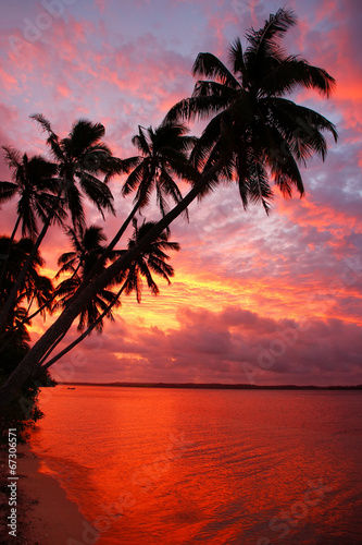 Silhouetted palm trees on a beach at sunset, Ofu island, Tonga - 67306571