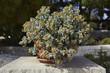 Italy, Sicily, succulent plants in a garden