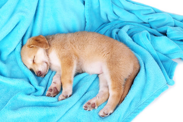 Little puppy sleeps on color plaid background