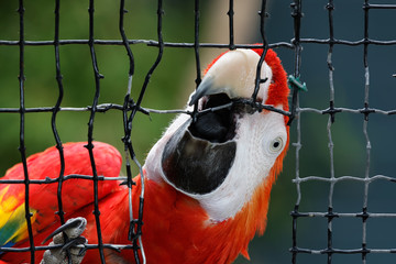 Macaw breaking out