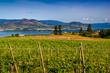 Vineyard overlooking lake and mountains