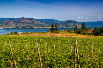 Vineyard overlooking lake and mountains